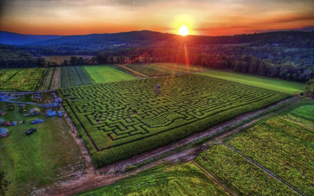Youth Mazezilla Corn Maze